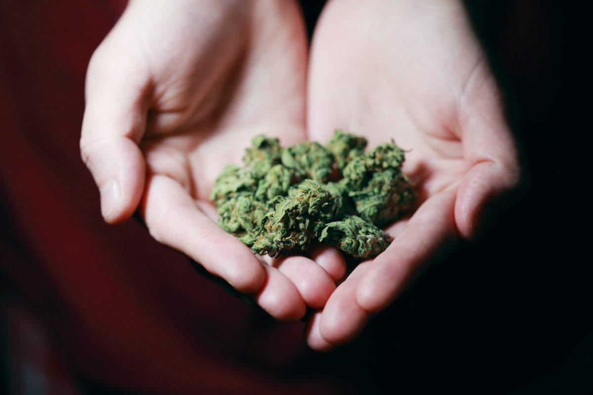 Cannabis drogue ou médicament ?